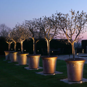 Dramatic grouping of pots uplit with olive trees