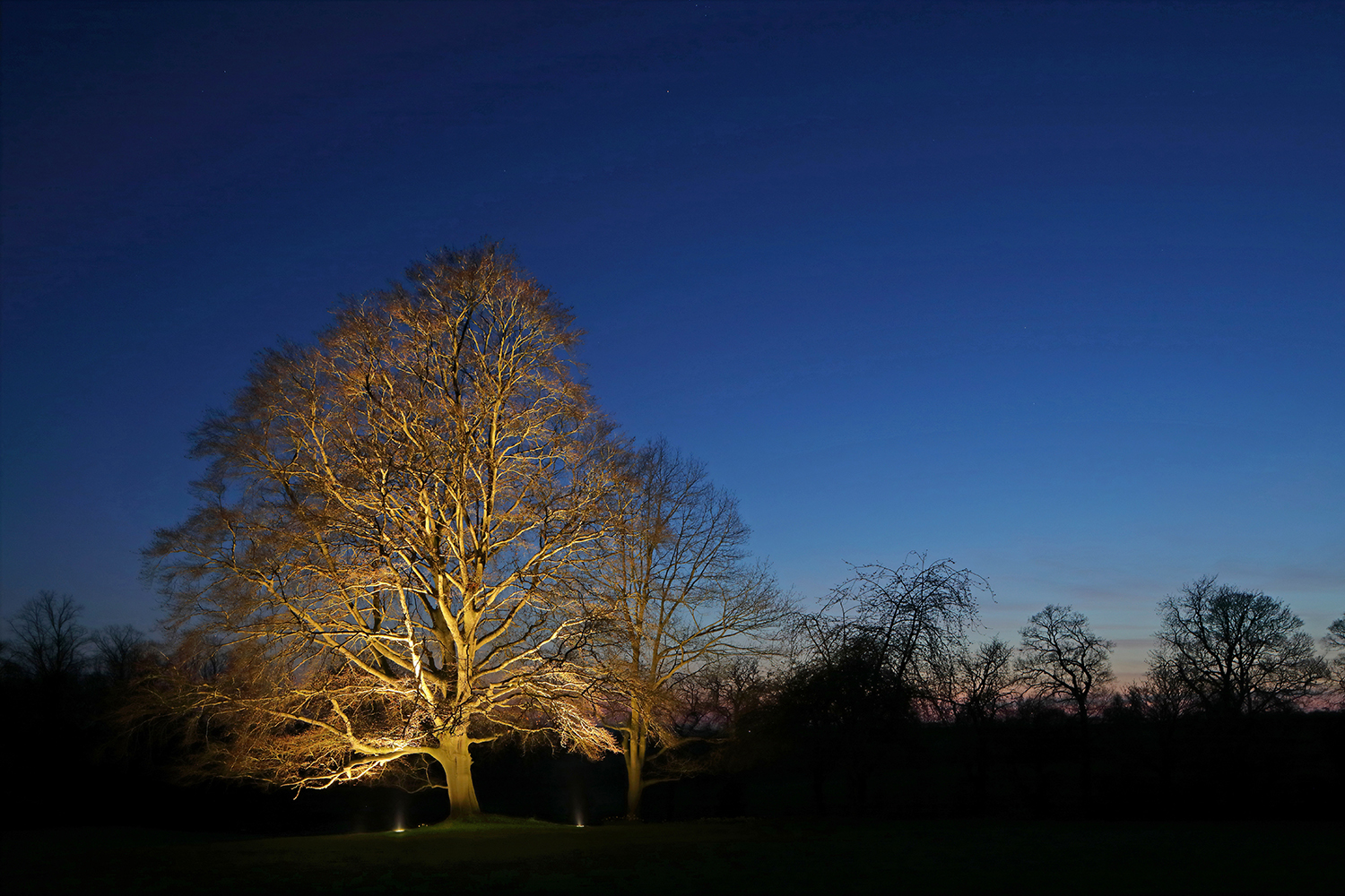 Uplight to large tree in garden